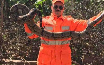 Jiboia é encontrada em plantação de bananas na Comunidade Juazeiro, em Nova Porteirinha