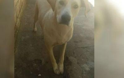 Polícia investiga candidato a vereador suspeito de estuprar uma cadela em Caldas Novas (GO)